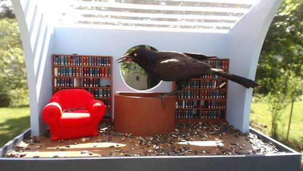 biblioteka-dla-ptakow-4