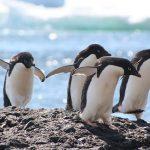 pingwinyadeli-flickrcc_640x426